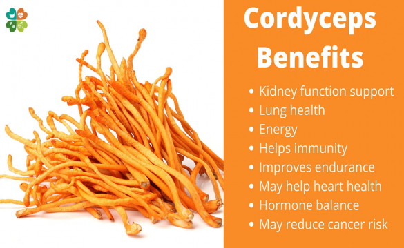 6 Science Backed Benefits Of Cordyceps